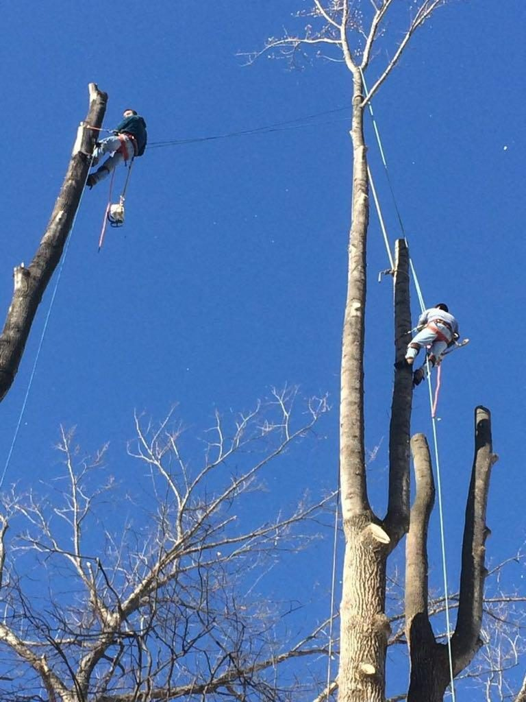 Climber Tree Service Inc -  Tree Removal, Trimming, Landscaping, Take Downs, Mulching Services